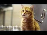 В США Animal Humane Society сняли социальную рекламу, призывающую взять из приюта домашнего питомца. Она называется